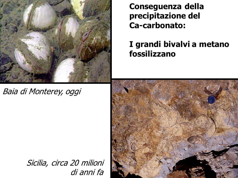 Conseguenza della precipitazione del Ca-carbonato: I grandi bivalvi a metano fossilizzano Baia di Monterey, oggi Sicilia, circa 20 milioni di anni fa