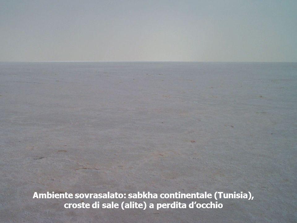 Ambiente sovrasalato: sabkha continentale (Tunisia), croste di sale (alite) a perdita docchio