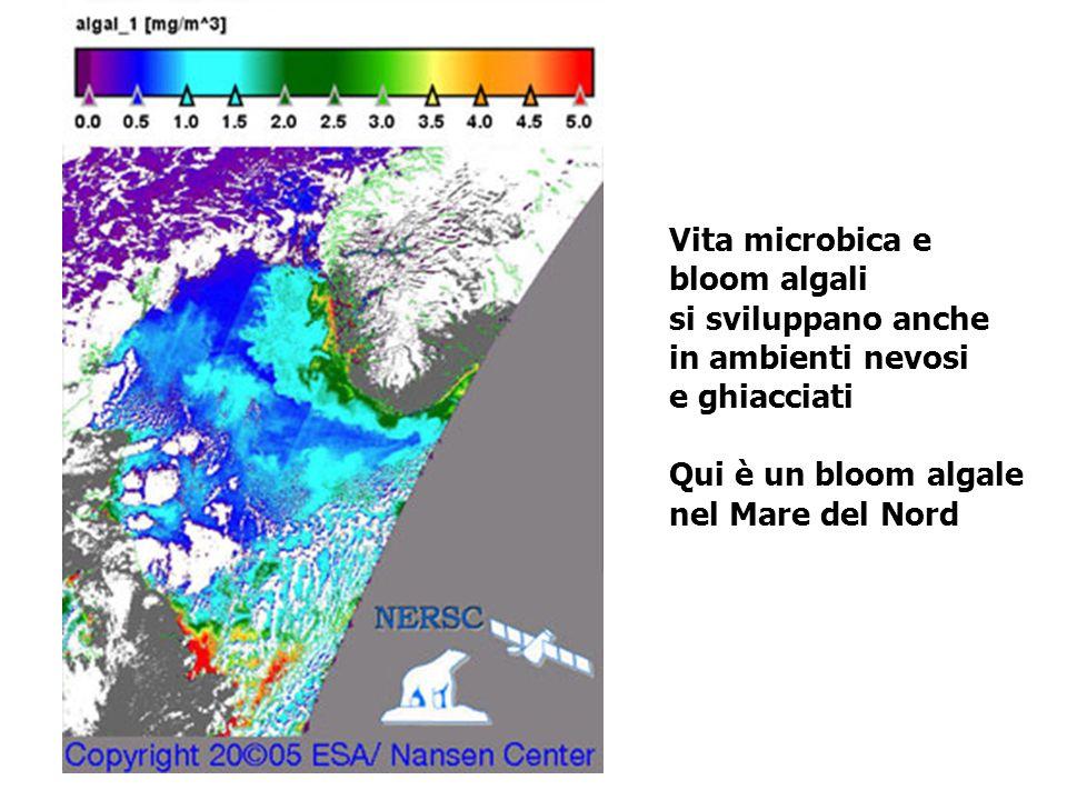 Vita microbica e bloom algali si sviluppano anche in ambienti nevosi e ghiacciati Qui è un bloom algale nel Mare del Nord