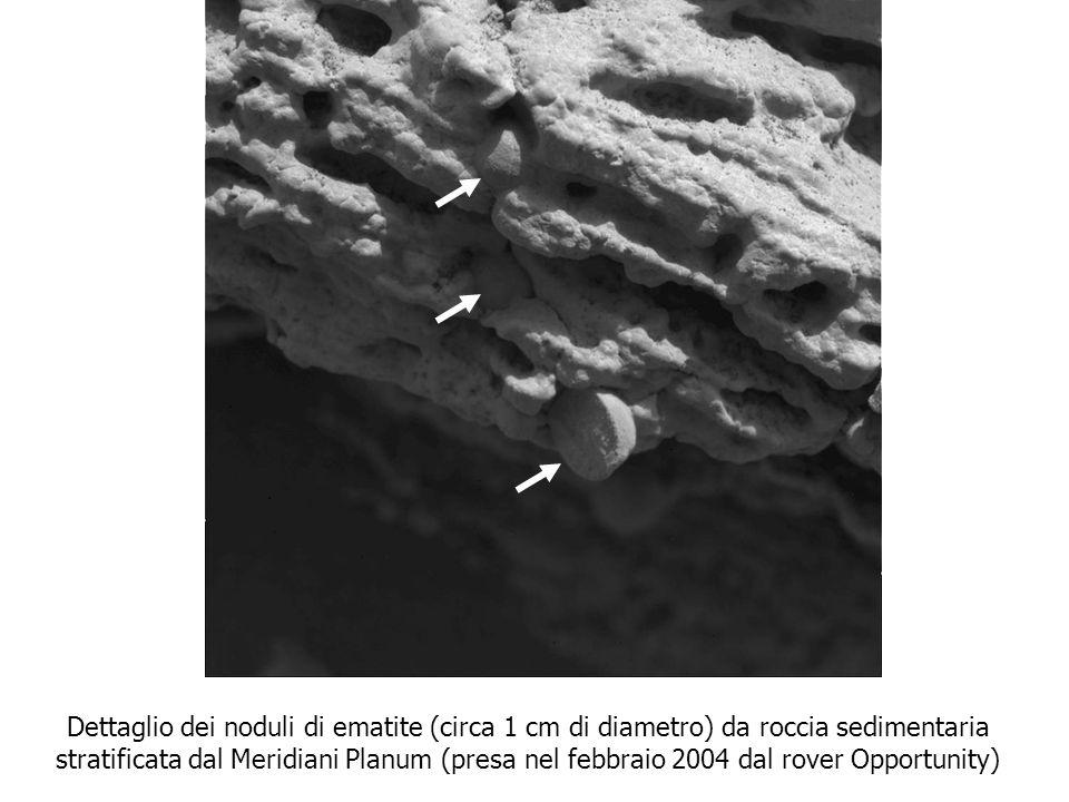 Dettaglio dei noduli di ematite (circa 1 cm di diametro) da roccia sedimentaria stratificata dal Meridiani Planum (presa nel febbraio 2004 dal rover O
