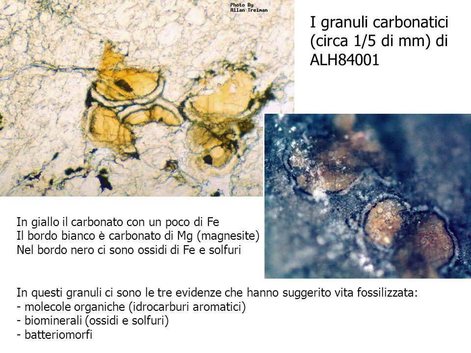 I granuli carbonatici (circa 1/5 di mm) di ALH84001 In giallo il carbonato con un poco di Fe Il bordo bianco è carbonato di Mg (magnesite) Nel bordo n