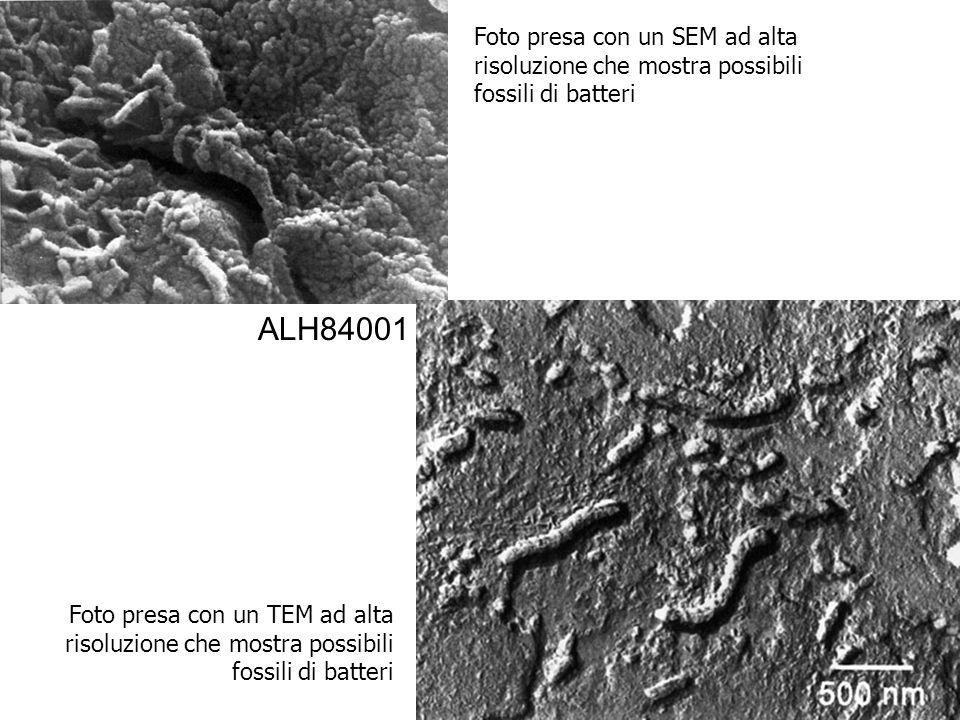 Foto presa con un TEM ad alta risoluzione che mostra possibili fossili di batteri Foto presa con un SEM ad alta risoluzione che mostra possibili fossi