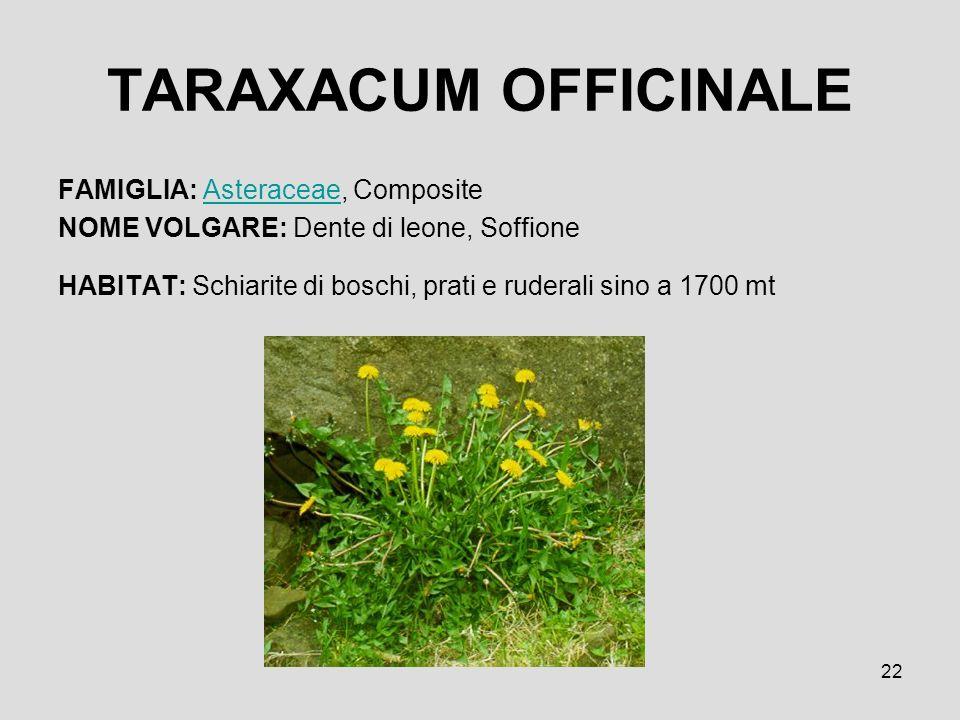 22 TARAXACUM OFFICINALE FAMIGLIA: Asteraceae, CompositeAsteraceae NOME VOLGARE: Dente di leone, Soffione HABITAT: Schiarite di boschi, prati e ruderal