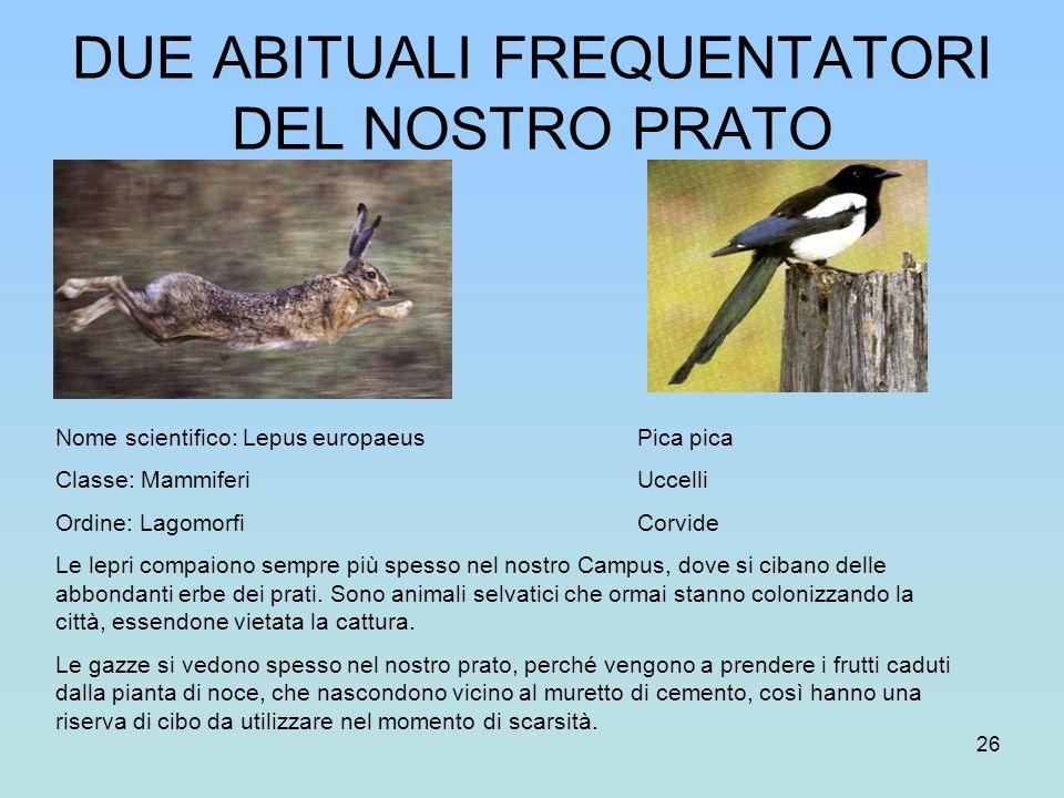 26 DUE ABITUALI FREQUENTATORI DEL NOSTRO PRATO Nome scientifico: Lepus europaeus Pica pica Classe: Mammiferi Uccelli Ordine: Lagomorfi Corvide Le lepr