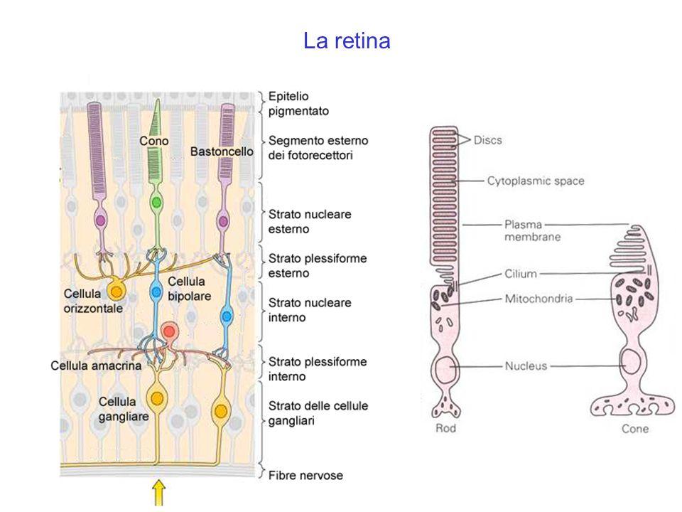 Disparità retinica
