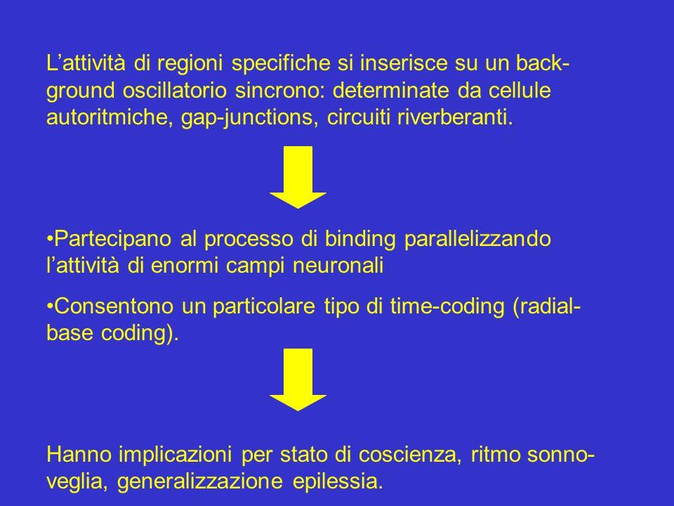 Lattività di regioni specifiche si inserisce su un back- ground oscillatorio sincrono: determinate da cellule autoritmiche, gap-junctions, circuiti ri