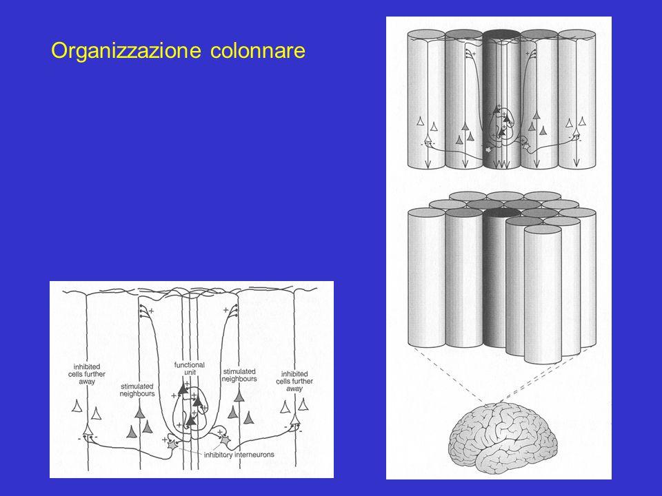 Organizzazione colonnare