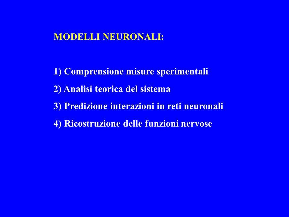 MODELLI NEURONALI: 1) Comprensione misure sperimentali 2) Analisi teorica del sistema 3) Predizione interazioni in reti neuronali 4) Ricostruzione del