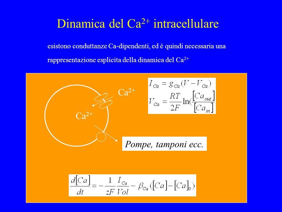 Dinamica del Ca 2+ intracellulare esistono conduttanze Ca-dipendenti, ed è quindi necessaria una rappresentazione esplicita della dinamica del Ca 2+ C