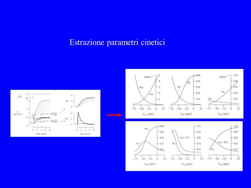 Vengono ricavati i parametri y Estrazione parametri cinetici