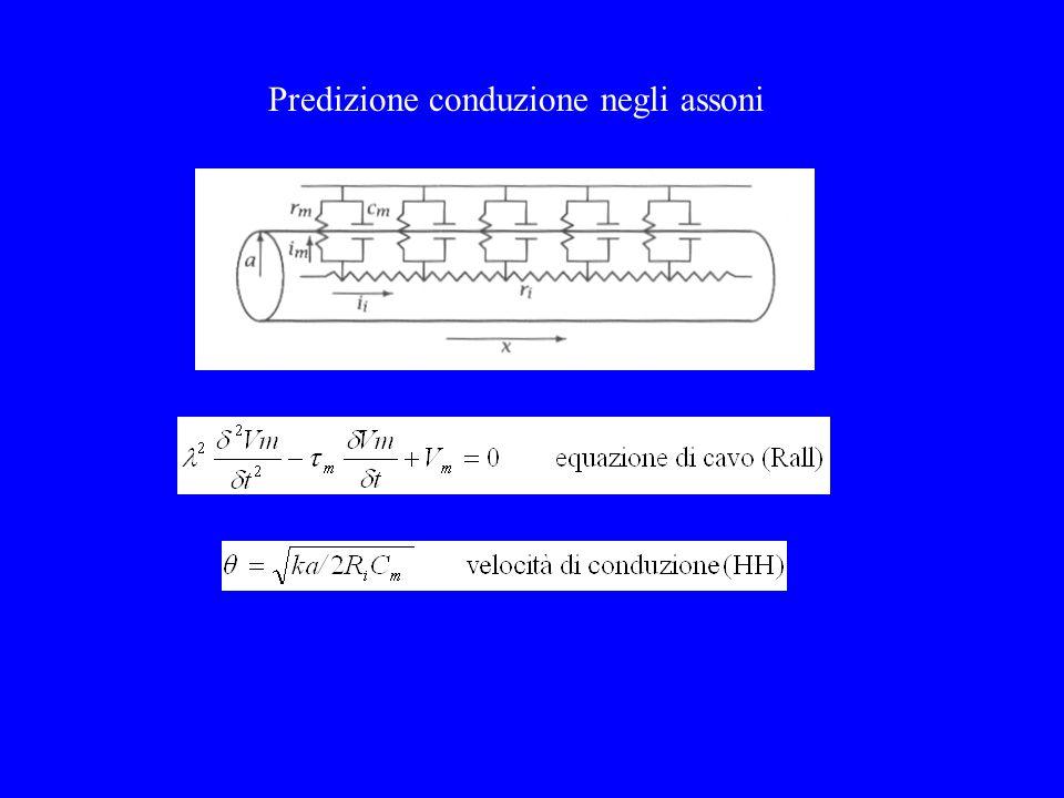 Predizione conduzione negli assoni