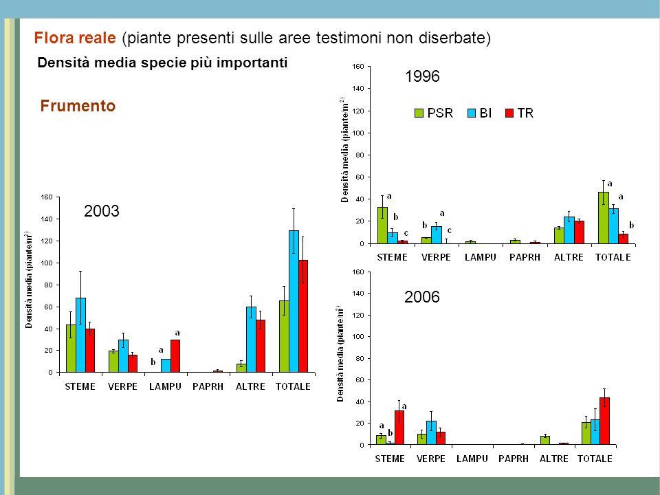Densità media specie più importanti Frumento 1996 2003 2006 Flora reale (piante presenti sulle aree testimoni non diserbate)