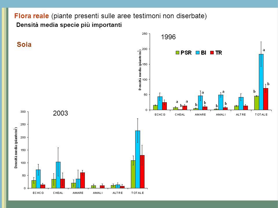 Densità media specie più importanti Soia 1996 2003 Flora reale (piante presenti sulle aree testimoni non diserbate)