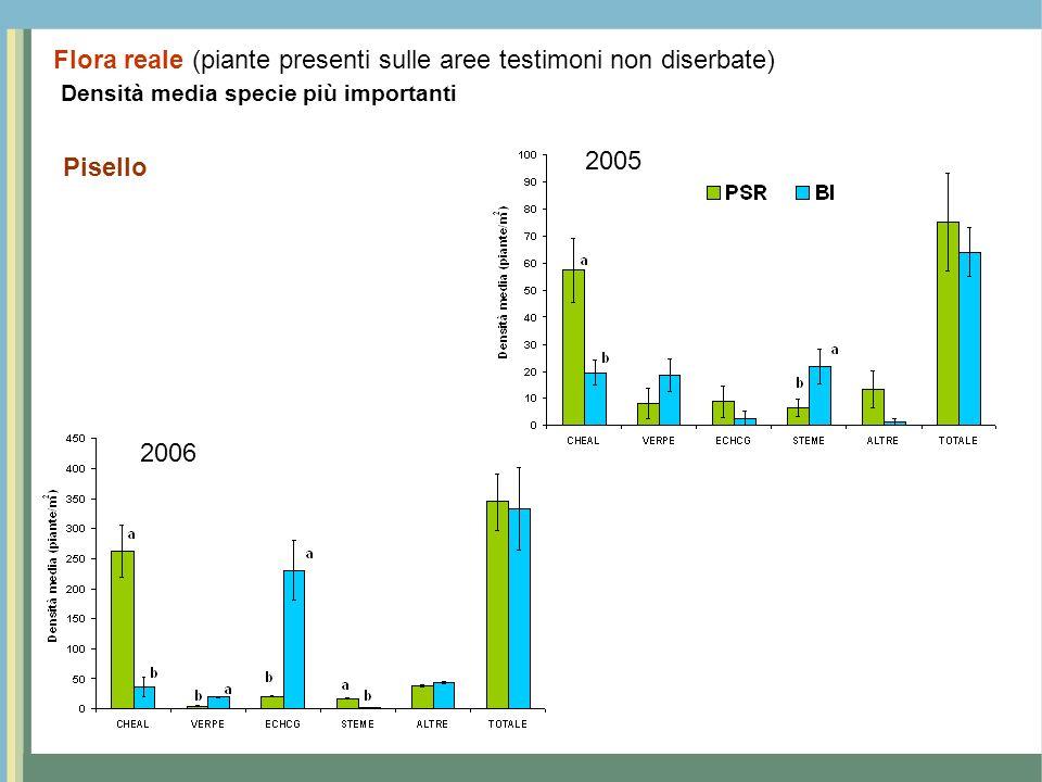 Densità media specie più importanti Pisello 2005 2006 Flora reale (piante presenti sulle aree testimoni non diserbate)