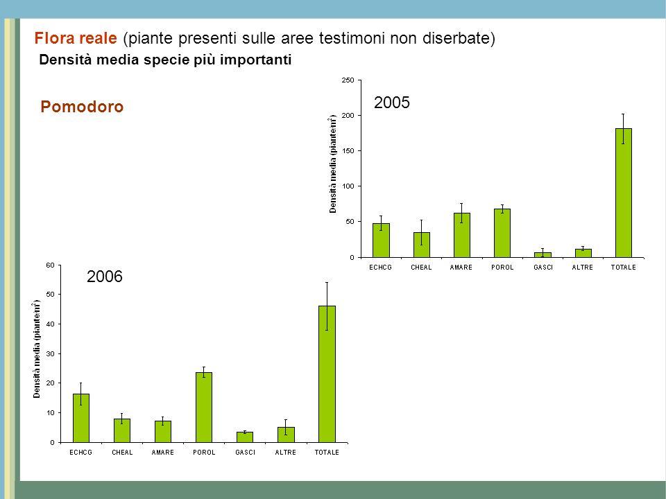 Densità media specie più importanti Pomodoro 2005 2006 Flora reale (piante presenti sulle aree testimoni non diserbate)