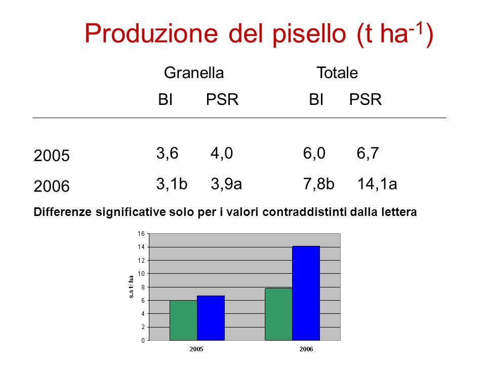 Produzione del pisello (t ha -1 ) TotaleGranella PSRBI PSR 2005 2006 6,0 7,8b 6,73,64,0 3,1b3,9a14,1a Differenze significative solo per i valori contraddistinti dalla lettera