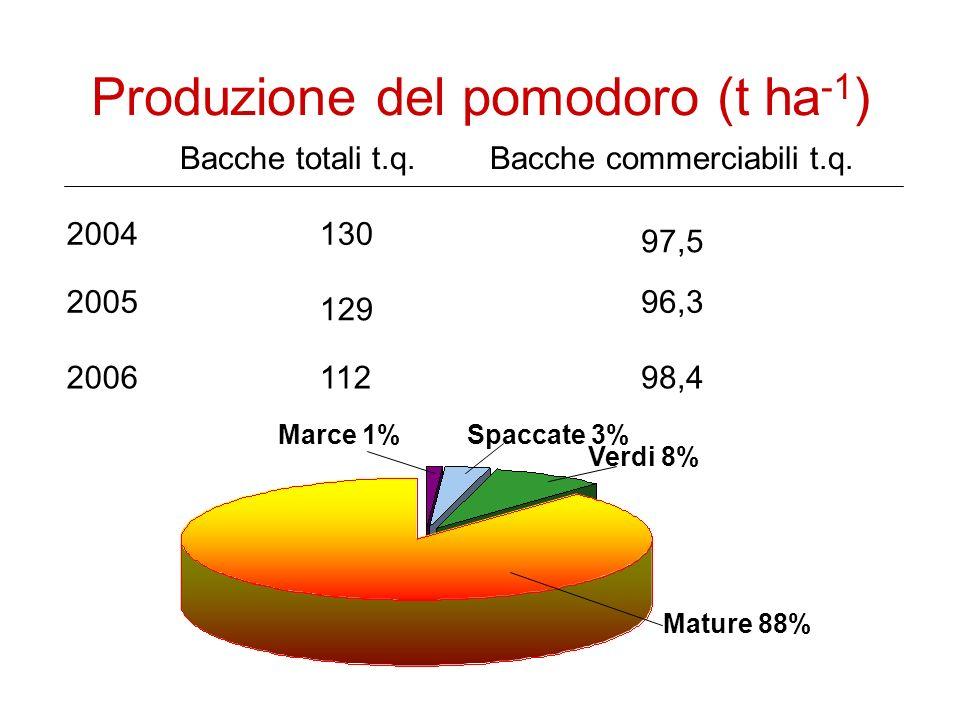 Produzione del pomodoro (t ha -1 ) 2004 2005 2006 Bacche totali t.q.Bacche commerciabili t.q.