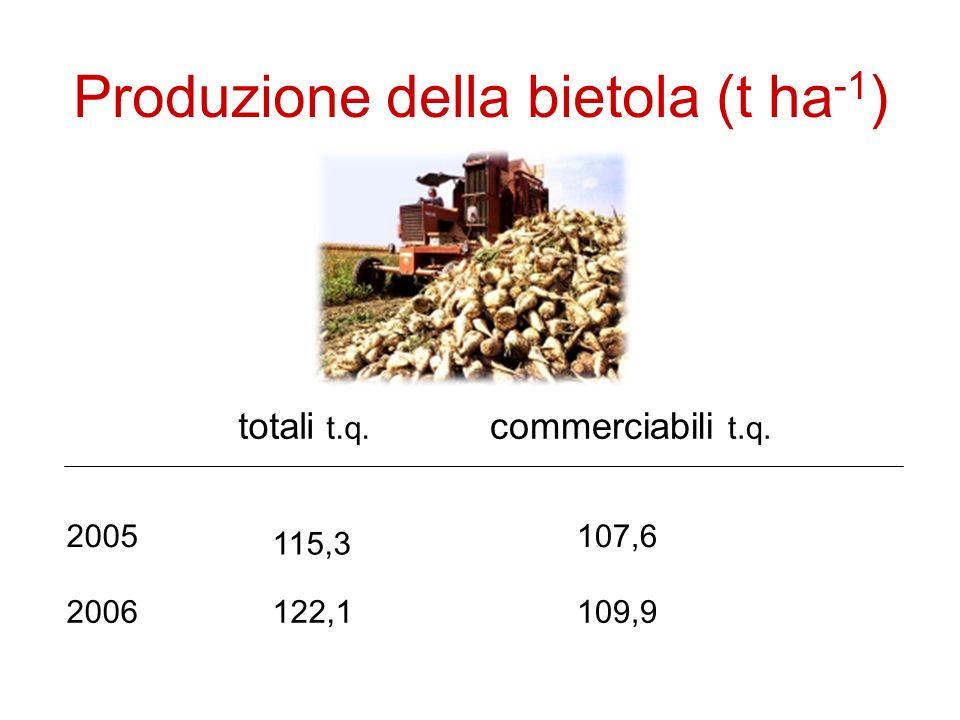Produzione della bietola (t ha -1 ) 2005 2006 totali t.q.