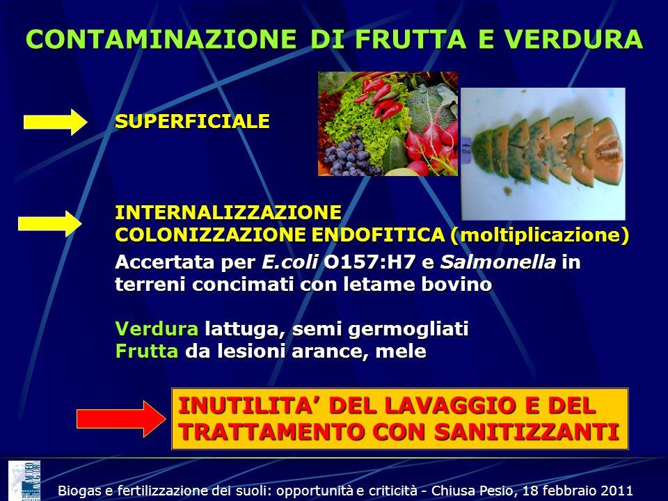 CONTAMINAZIONE DI FRUTTA E VERDURA SUPERFICIALE INTERNALIZZAZIONE COLONIZZAZIONE ENDOFITICA (moltiplicazione) Accertata per E.coli O157:H7 e Salmonell