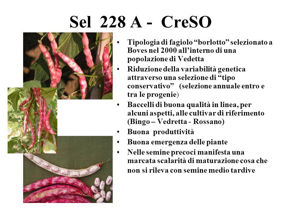 Sel 228 A - CreSO Tipologia di fagiolo borlotto selezionato a Boves nel 2000 allinterno di una popolazione di Vedetta Riduzione della variabilità gene