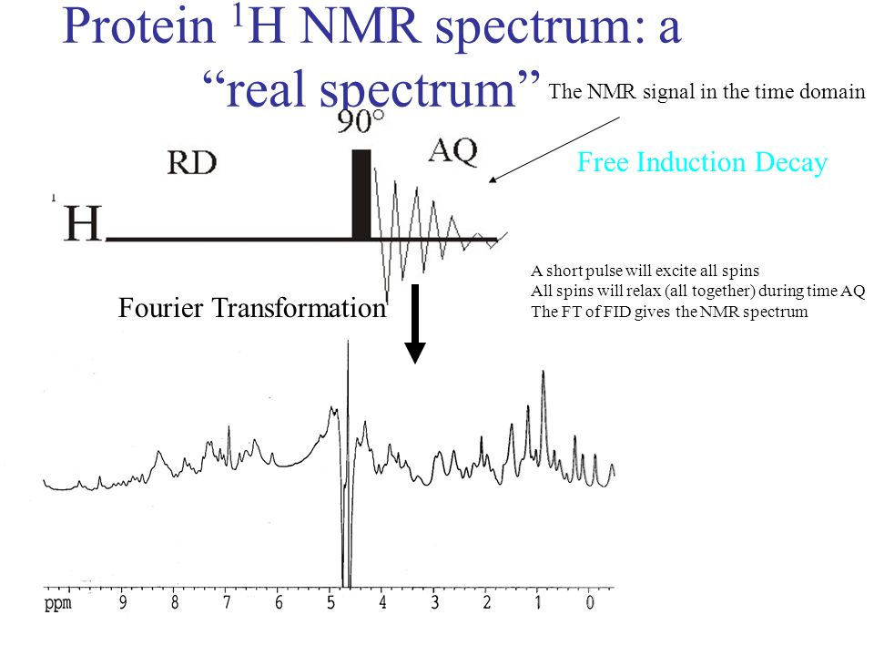 Protein 1 H NMR spectrum: a real spectrum Fourier Transformation The NMR signal in the time domain Free Induction Decay A short pulse will excite all