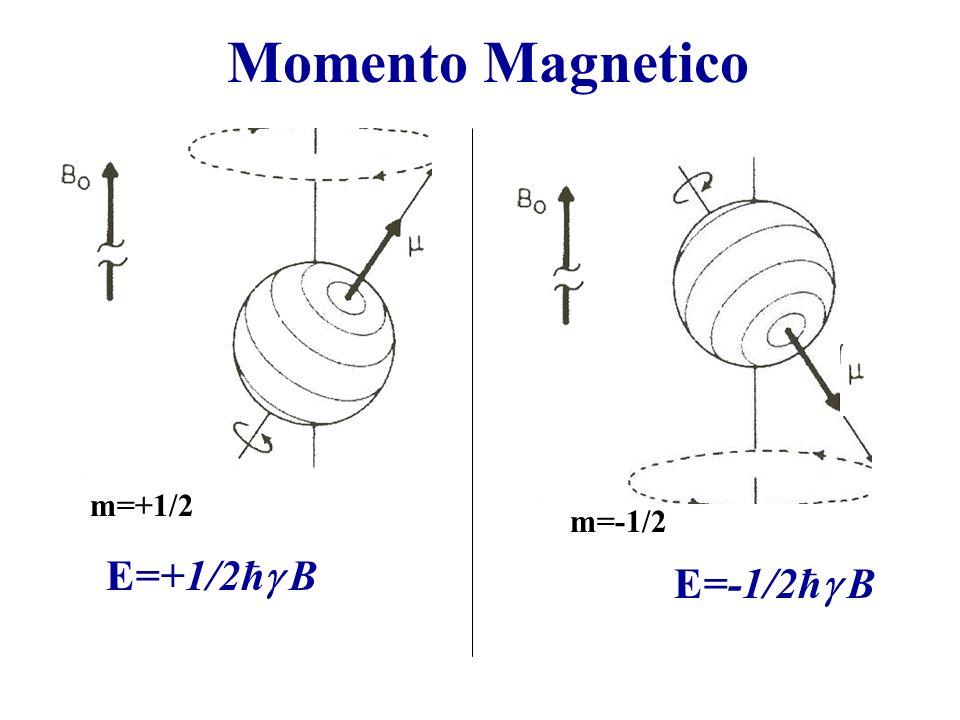 Momento Magnetico m=+1/2 m=-1/2 E=+1/2ħ B E=-1/2ħ B
