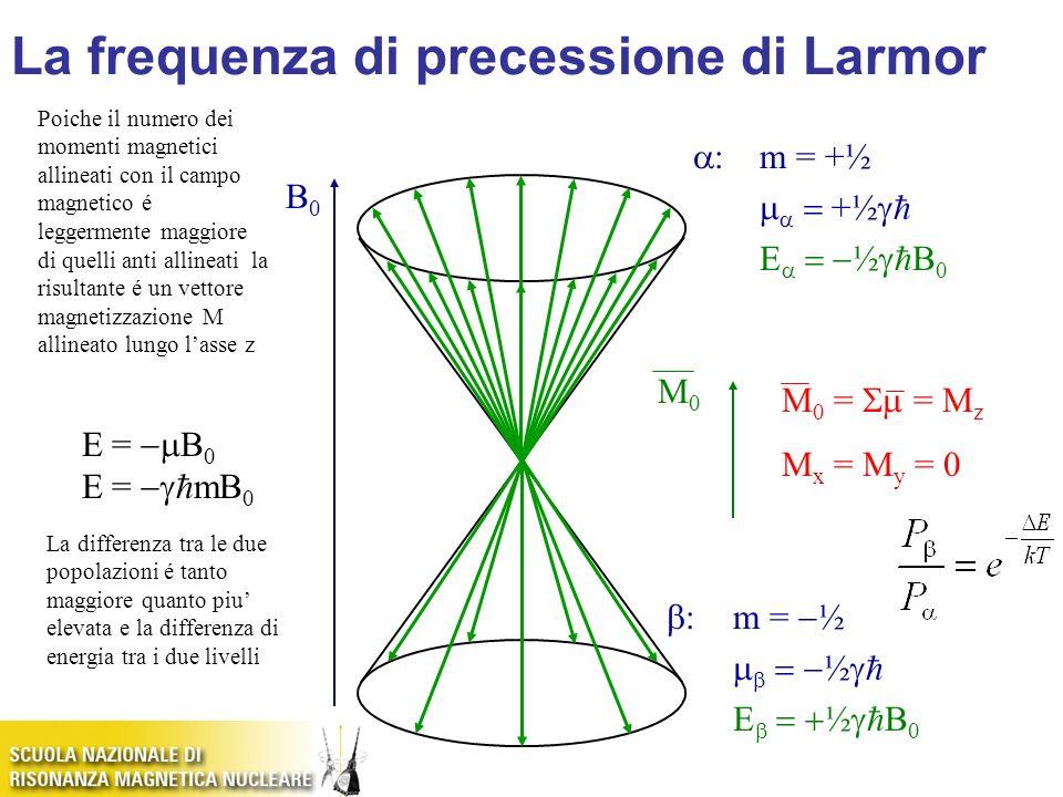 B0B0 M0M0 E = B 0 E = mB 0 :m = +½ +½ E ½ B 0 :m = ½ ½ E ½ B 0 M 0 = = M z M x = M y = 0 La frequenza di precessione di Larmor Poiche il numero dei mo