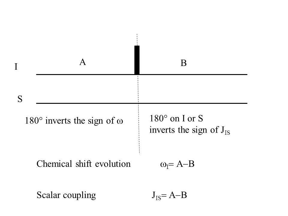 I Chemical shift evolution 180° inverts the sign of S 180° on I or S inverts the sign of J IS Scalar coupling J IS