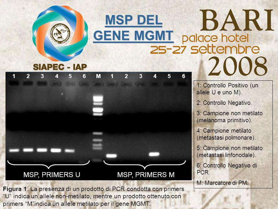 123456123456M MSP, PRIMERS U MSP, PRIMERS M Figura 1. La presenza di un prodotto di PCR condotta con primers U indica un allele non-metilato, mentre u