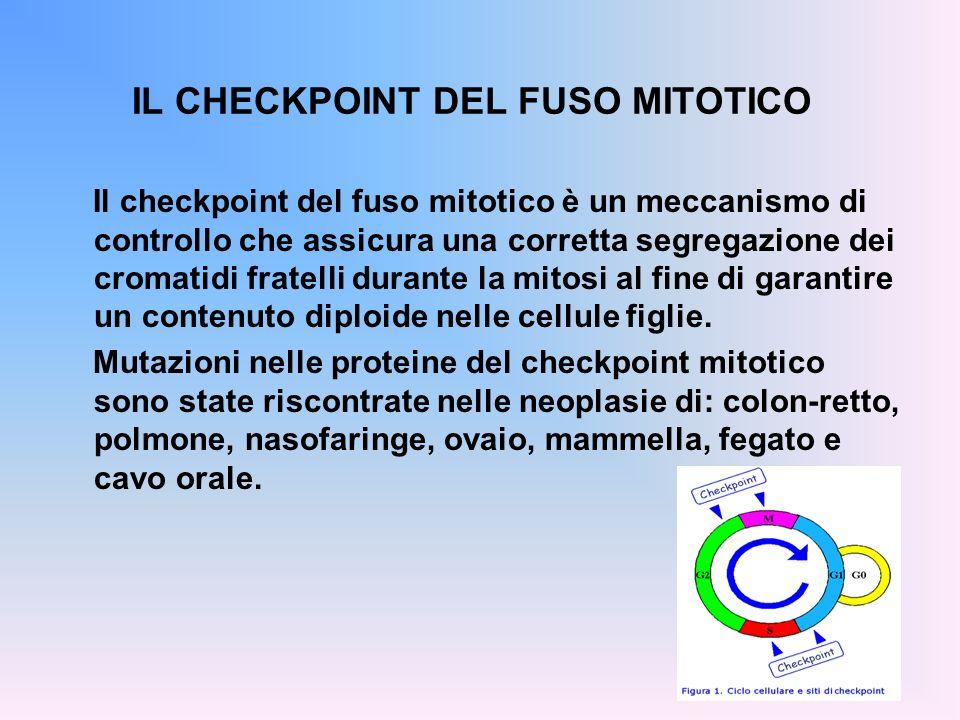 IL CHECKPOINT DEL FUSO MITOTICO Il checkpoint del fuso mitotico è un meccanismo di controllo che assicura una corretta segregazione dei cromatidi frat