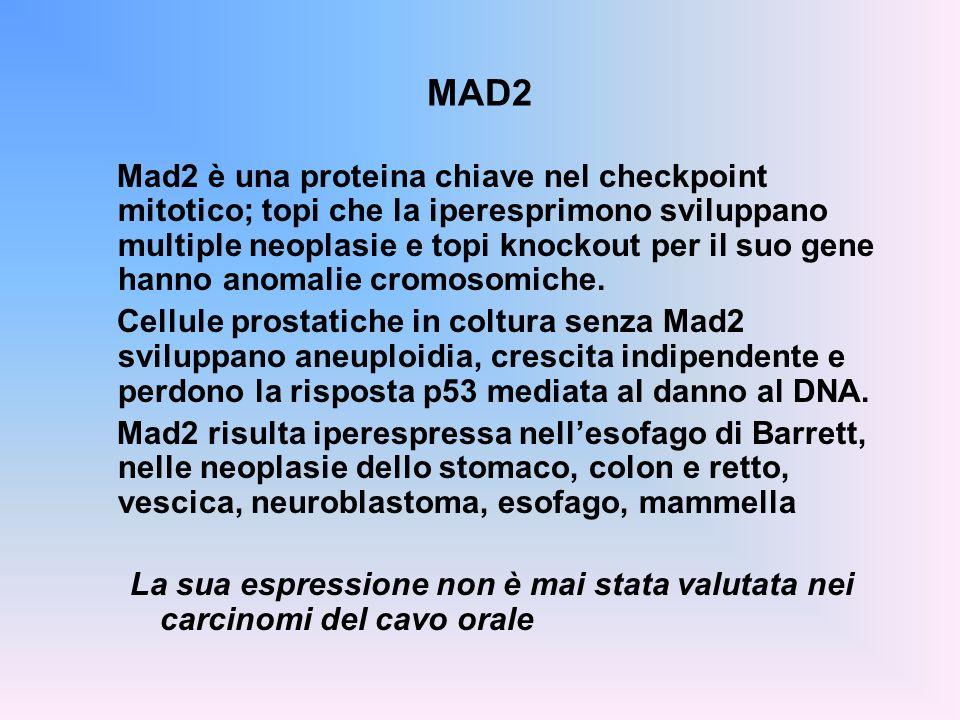 MAD2 Mad2 è una proteina chiave nel checkpoint mitotico; topi che la iperesprimono sviluppano multiple neoplasie e topi knockout per il suo gene hanno