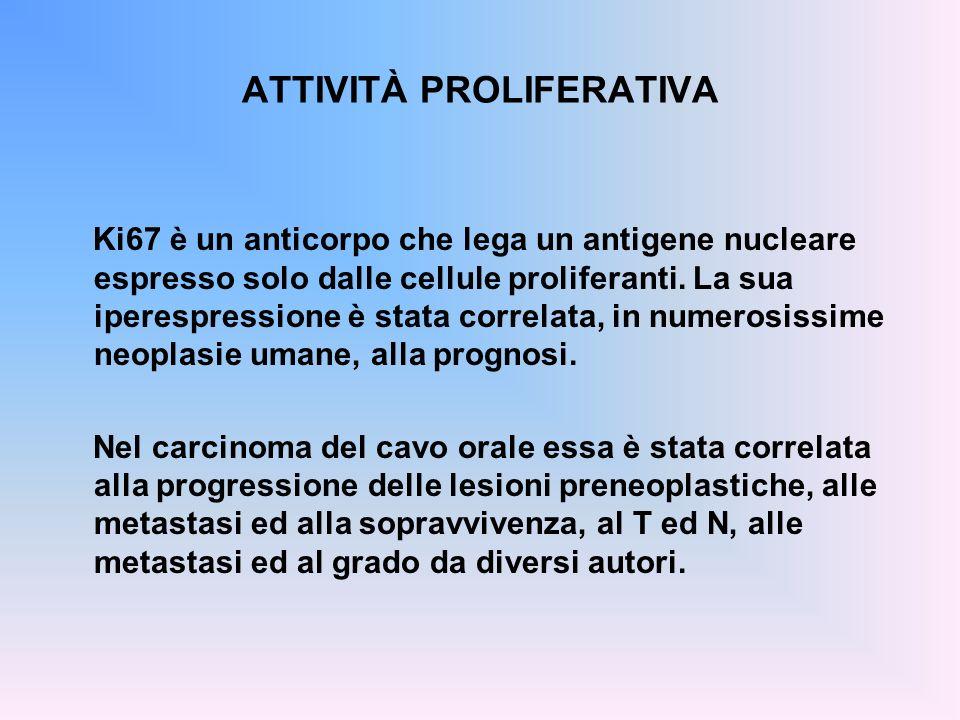 ATTIVITÀ PROLIFERATIVA Ki67 è un anticorpo che lega un antigene nucleare espresso solo dalle cellule proliferanti. La sua iperespressione è stata corr