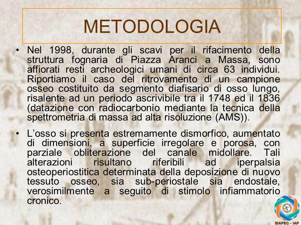 METODOLOGIA Nel 1998, durante gli scavi per il rifacimento della struttura fognaria di Piazza Aranci a Massa, sono affiorati resti archeologici umani