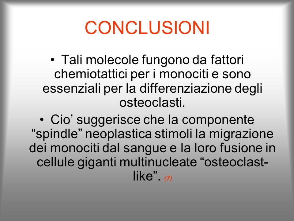 CONCLUSIONI Tali molecole fungono da fattori chemiotattici per i monociti e sono essenziali per la differenziazione degli osteoclasti. Cio suggerisce