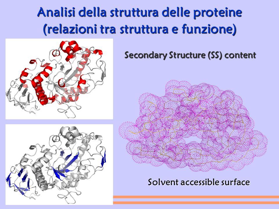 Analisi della struttura delle proteine (relazioni tra struttura e funzione) Secondary Structure (SS) content Solvent accessible surface