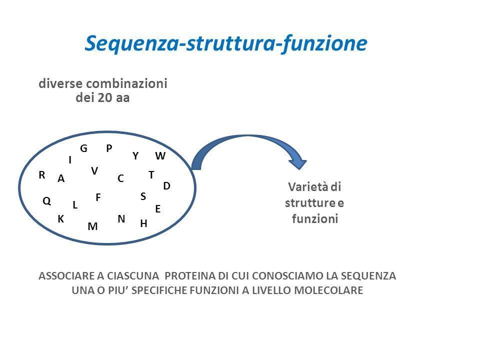 Sequenza-struttura-funzione diverse combinazioni dei 20 aa A I L V M F P Y S T C N Q E D R K H W G Varietà di strutture e funzioni ASSOCIARE A CIASCUNA PROTEINA DI CUI CONOSCIAMO LA SEQUENZA UNA O PIU SPECIFICHE FUNZIONI A LIVELLO MOLECOLARE