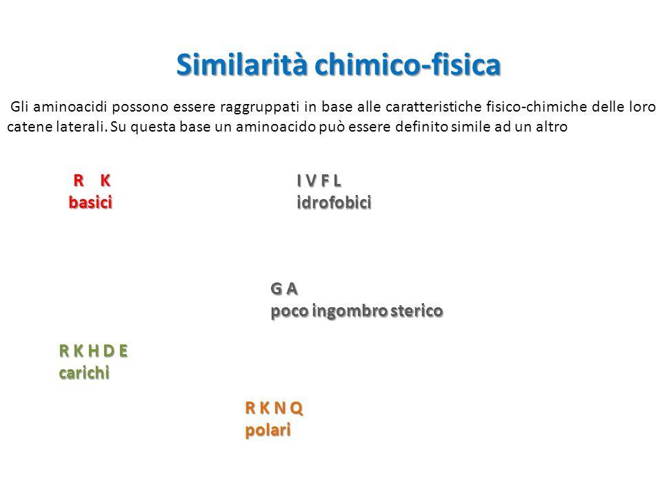 Similarità chimico-fisica Gli aminoacidi possono essere raggruppati in base alle caratteristiche fisico-chimiche delle loro catene laterali.