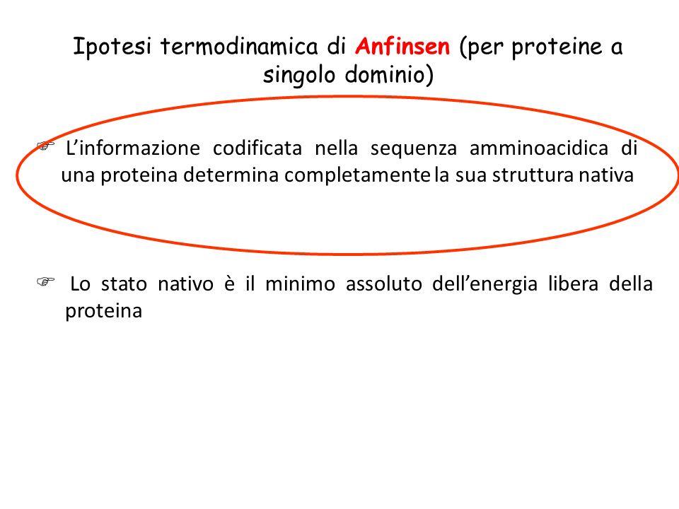 Ipotesi termodinamica di Anfinsen (per proteine a singolo dominio) Linformazione codificata nella sequenza amminoacidica di una proteina determina com