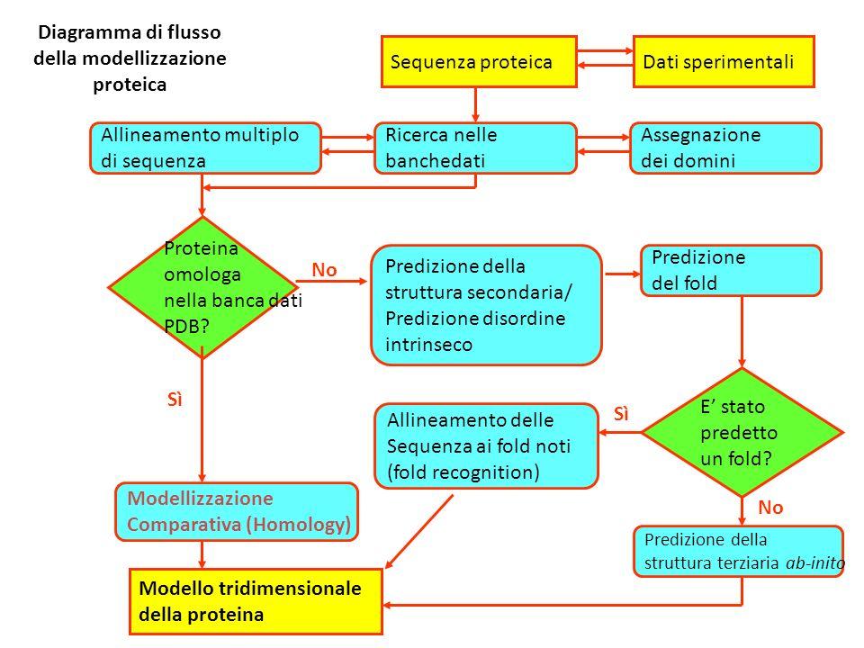 Diagramma di flusso della modellizzazione proteica Sequenza proteica Proteina omologa nella banca dati PDB? Predizione della struttura secondaria/ Pre