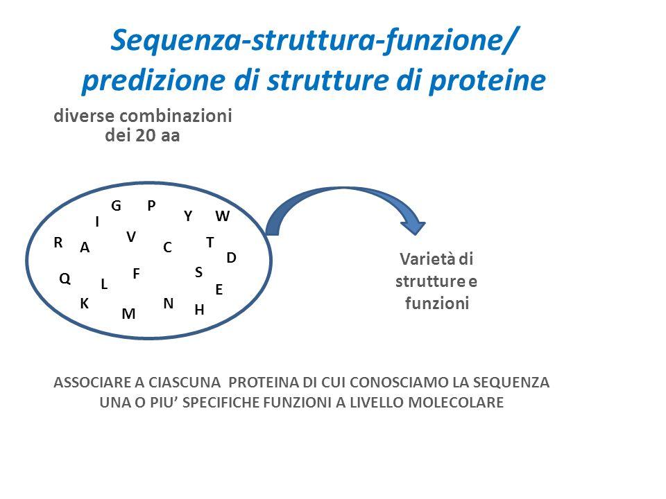 Sequenza-struttura-funzione/ predizione di strutture di proteine diverse combinazioni dei 20 aa A I L V M F P Y S T C N Q E D R K H W G Varietà di str