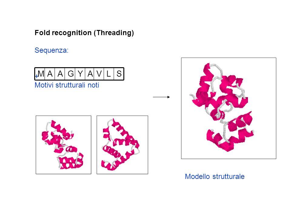 Fold recognition (Threading) Sequenza: + Motivi strutturali noti SLVAYGAAM Modello strutturale