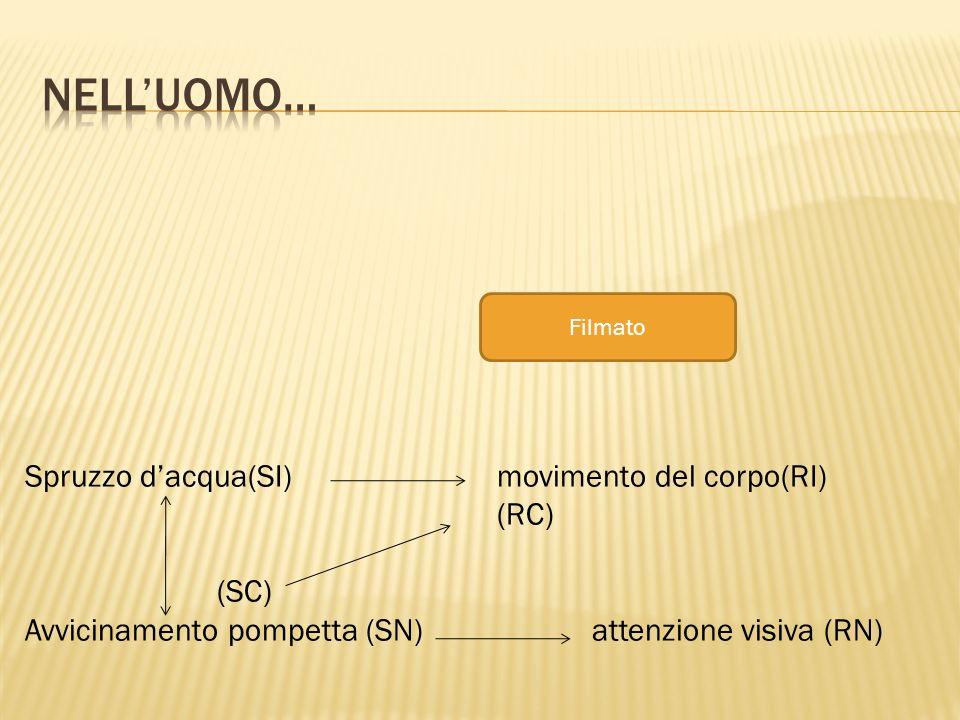 Filmato Spruzzo dacqua(SI) movimento del corpo(RI) (RC) (SC) Avvicinamento pompetta (SN) attenzione visiva (RN)