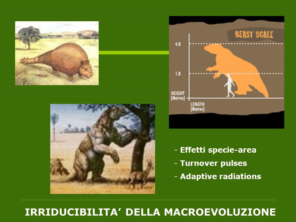 - Effetti specie-area - Turnover pulses - Adaptive radiations IRRIDUCIBILITA DELLA MACROEVOLUZIONE