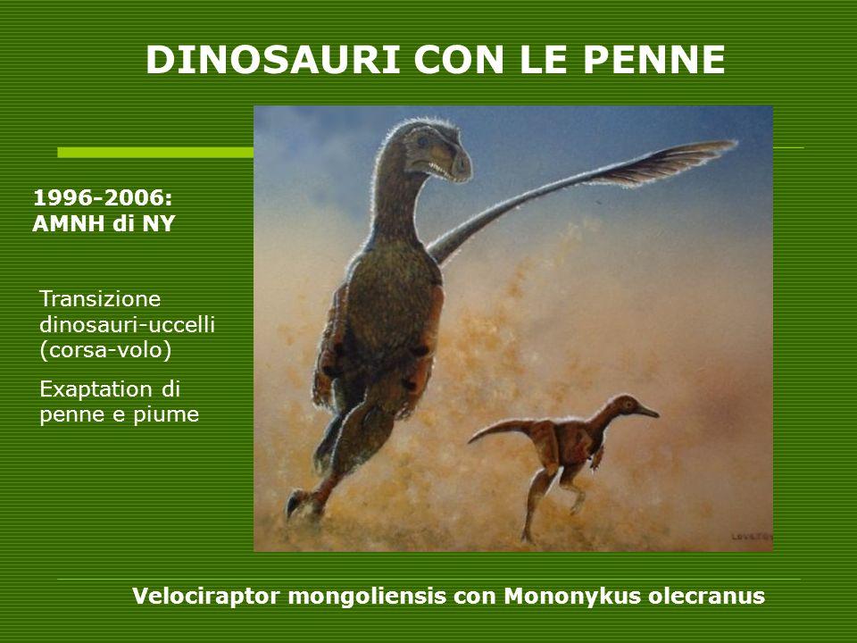 Velociraptor mongoliensis con Mononykus olecranus DINOSAURI CON LE PENNE 1996-2006: AMNH di NY Transizione dinosauri-uccelli (corsa-volo) Exaptation d