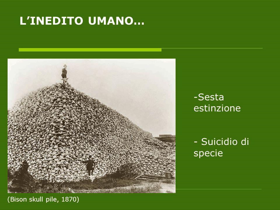 LINEDITO UMANO… -Sesta estinzione - Suicidio di specie (Bison skull pile, 1870)
