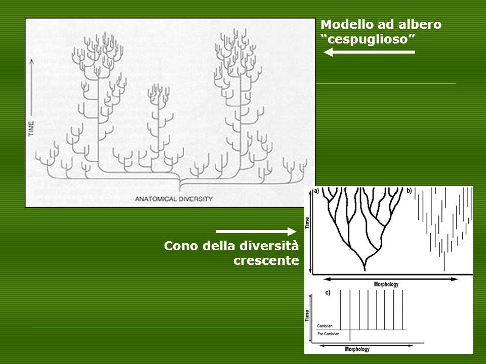 Modello ad albero cespuglioso Cono della diversità crescente