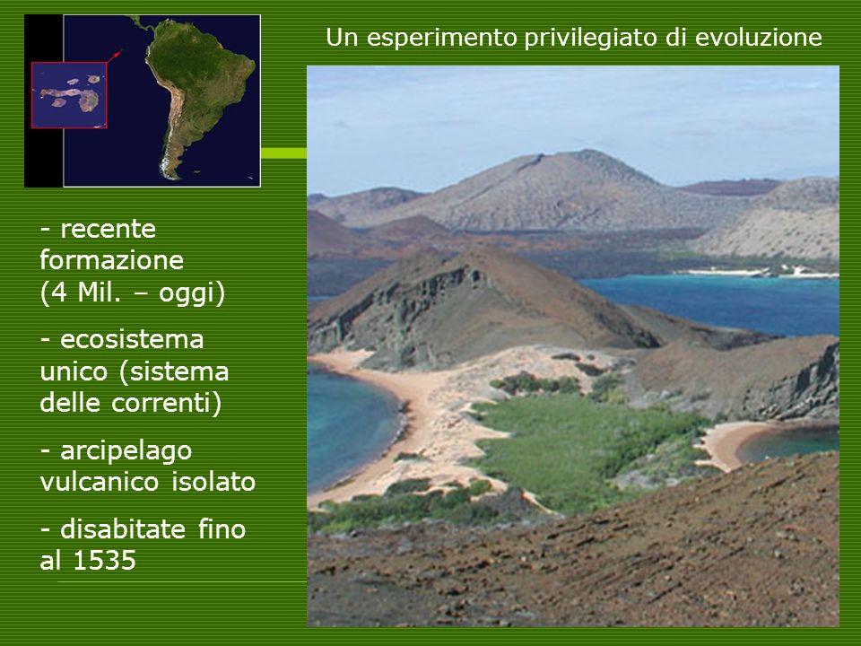 Un esperimento privilegiato di evoluzione - recente formazione (4 Mil. – oggi) - ecosistema unico (sistema delle correnti) - arcipelago vulcanico isol