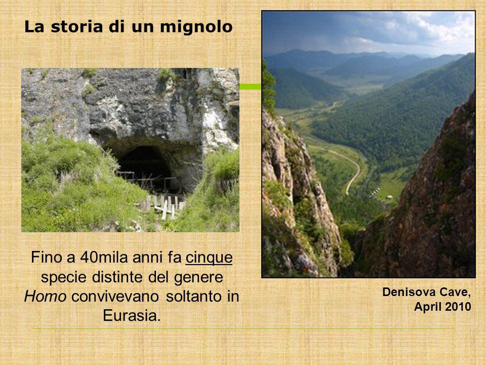 Fino a 40mila anni fa cinque specie distinte del genere Homo convivevano soltanto in Eurasia. Denisova Cave, April 2010 La storia di un mignolo