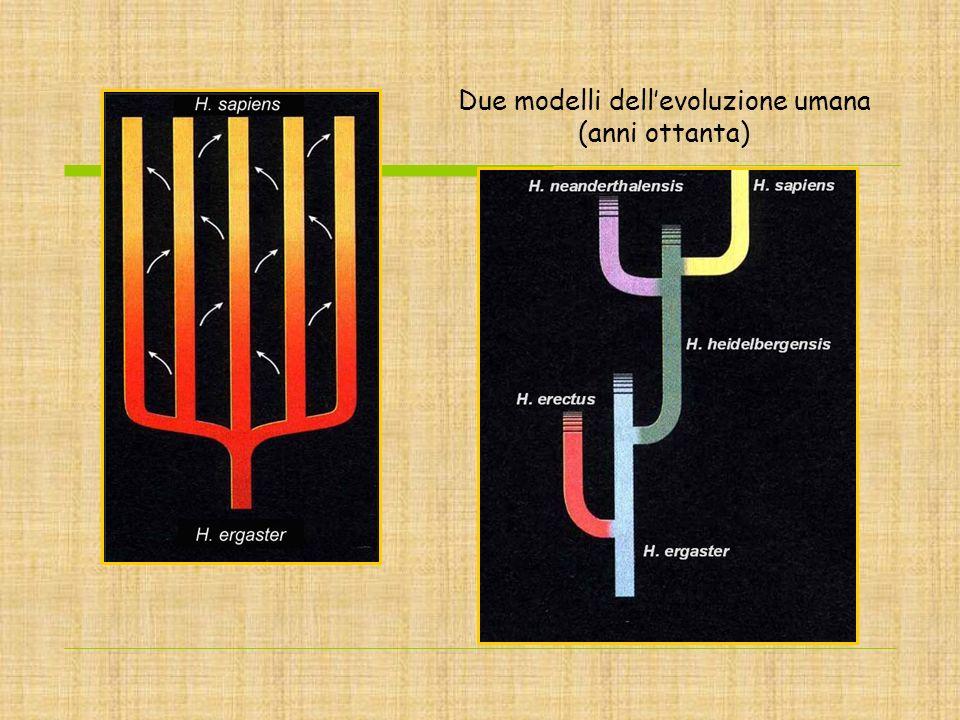 Due modelli dellevoluzione umana (anni ottanta)