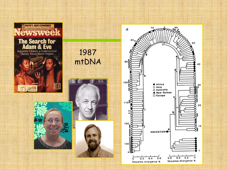 1987 mtDNA